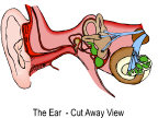 The inner ear is used fot hearing, balance, and much misunderstood poison control.