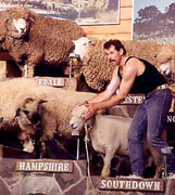 Queensland's Sheep Show is famous world round.