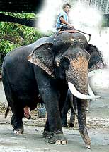 Elephant Rides are among the amazing things to do in Thailand.