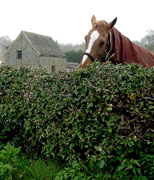 Welsh Horse Farm.